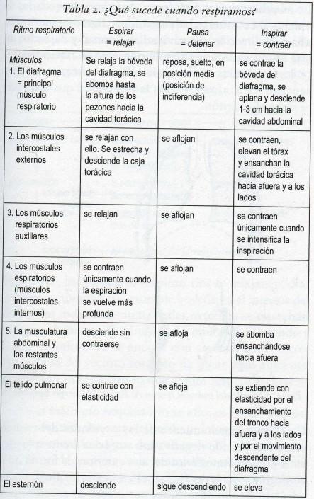 EL PAPEL DE LOS MÚSCULOS ABDOMINALES EN LA ESPIRACIÓN SONORIZADA ...